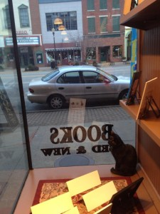 cat in bookstore
