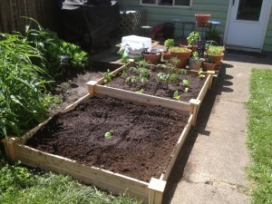 raised vegetable bed