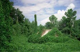 I am the relentless kudzu of writers.
